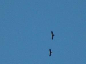 eagleb-ap-8-09